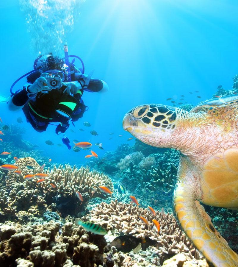 L'exploration des joyaux & milieux marins incontournables